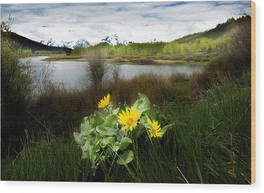 Mount Moran Spring Wood Print