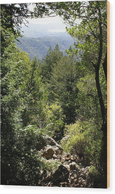 Mount Tamalpais Forest View Wood Print