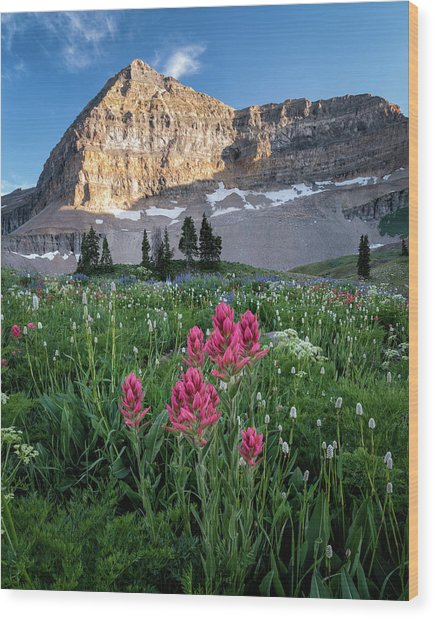 Mount Timpanogos Wildflowers Wood Print