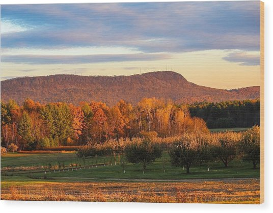 Mount Tom Foliage View Wood Print