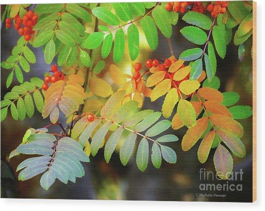Mountain Ash Fall Color Wood Print