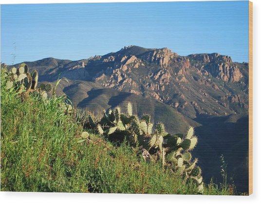 Mountain Cactus View - Santa Monica Mountains Wood Print