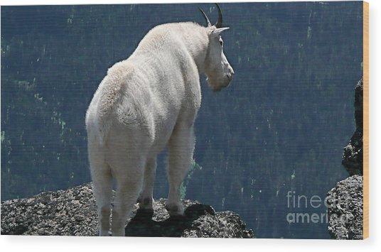Mountain Goat 2 Wood Print