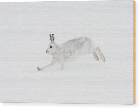 Mountain Hare Running Wood Print