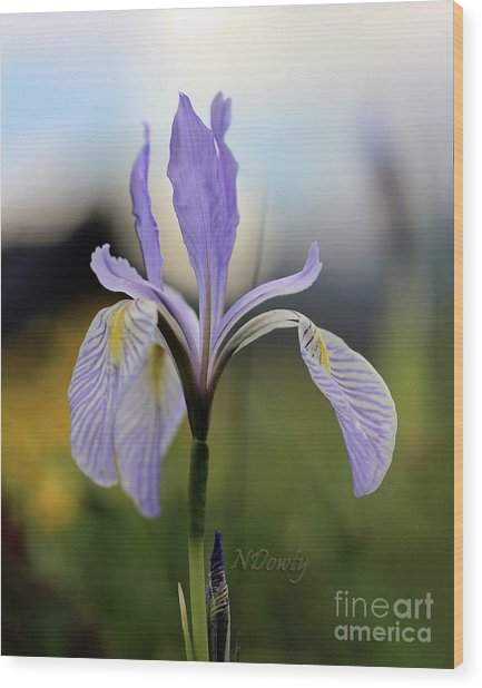 Mountain Iris With Bud Wood Print