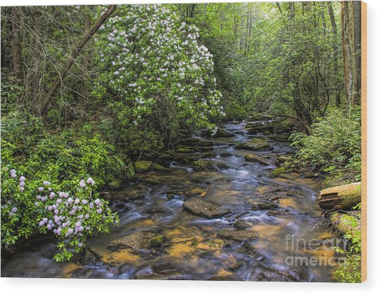 Mountain Laurels Light Up Panther Creek Wood Print