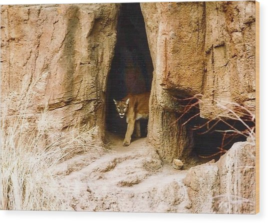 Mountain Lion In The Desert Wood Print