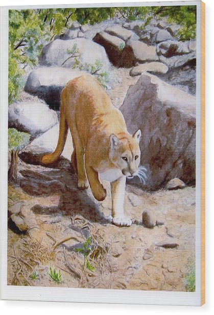 Mountain Lion In The Wild Wood Print by Lorraine Foster