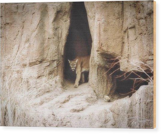 Mountain Lion - Light Wood Print