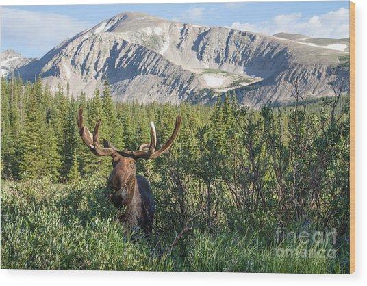 Mountain Moose Wood Print