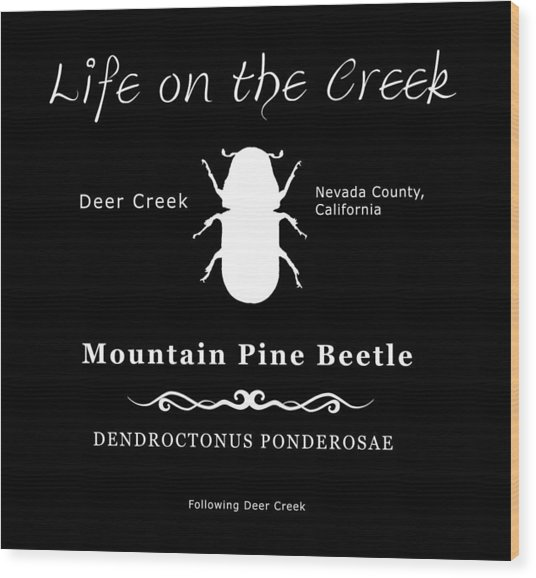Mountain Pine Beetle White On Black Wood Print