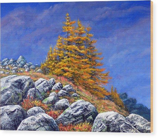 Mountain Tamaracks Wood Print