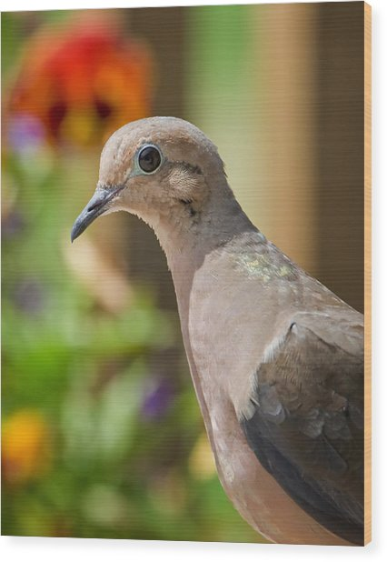 Mourning Dove And Flowers Wood Print