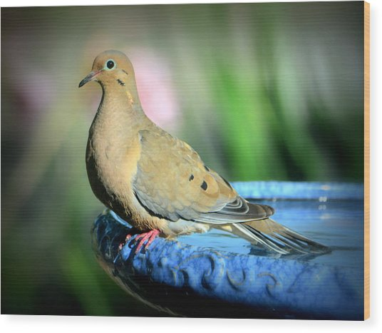 Mourning Dove Perched Wood Print