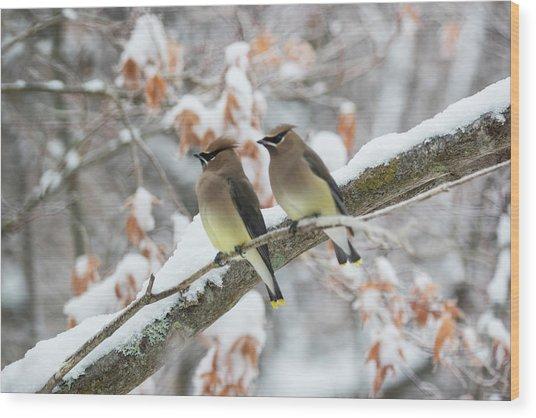 Mr. And Mrs. Cedar Wax Wing Wood Print