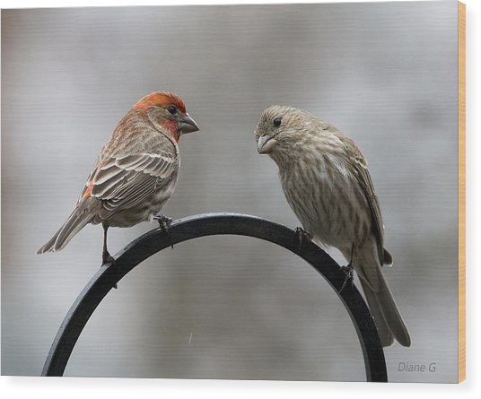 Mr. And Mrs. House Finch Wood Print