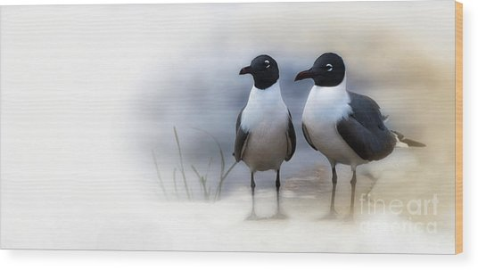 Mr And Mrs Laughing Gull Wood Print