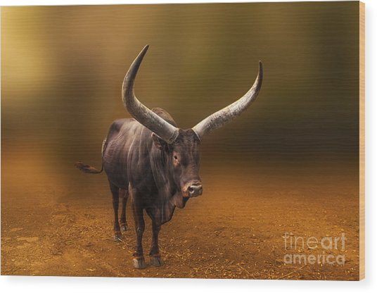 Mr. Bull From Africa Wood Print