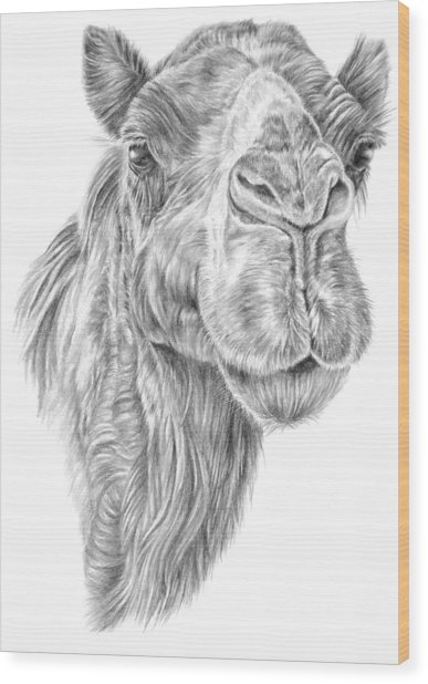 Mr Rak Camel Wood Print