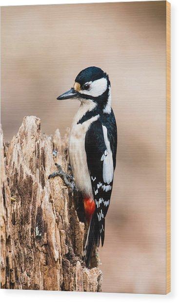 Mrs Woodpecker Wood Print