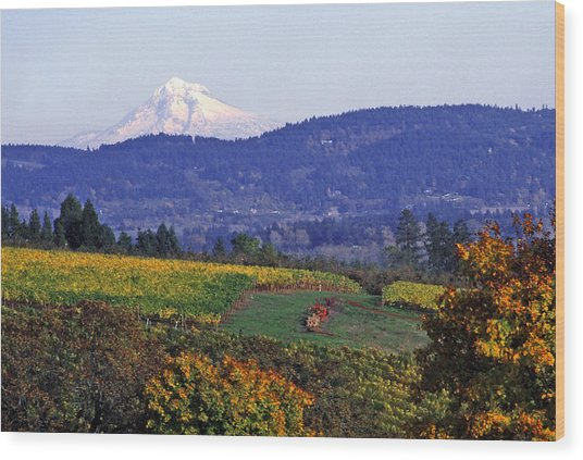 Mt. Hood From A Dundee Hills Vineyard Wood Print