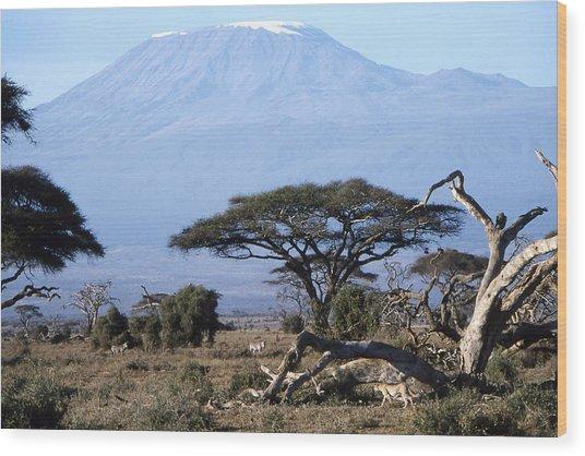 Mt.kilimanjaro Wood Print by Wade Worsley