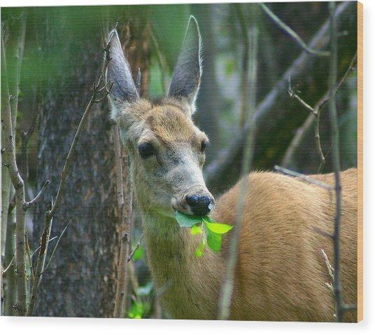 Mule Deer Eating Aspen Leaves Wood Print
