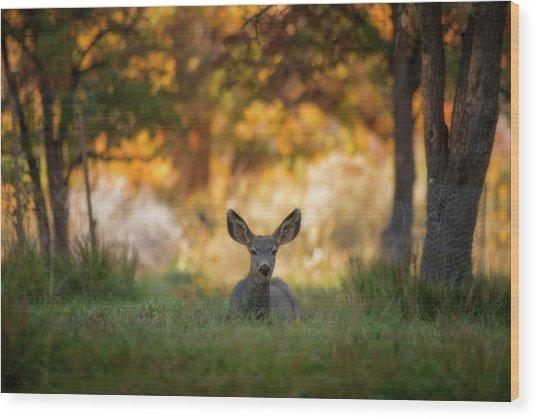 Mule Deer In Apple Orchard Wood Print
