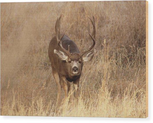 Muledeerbuck1 Wood Print