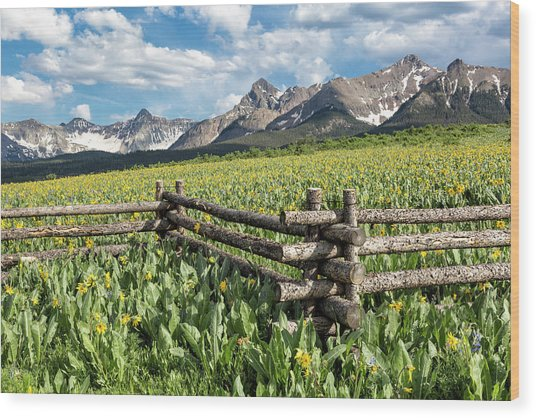 Mule's Ears And Mountains Wood Print