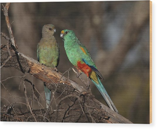 Mulga Parrot Pair Wood Print