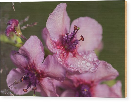 Mullein In The Mist Wood Print