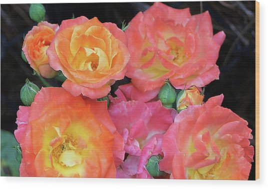 Multi-color Roses Wood Print