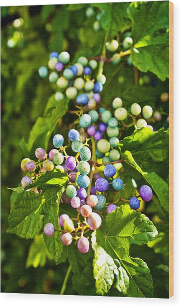 Multicolored Berry Vine Wood Print