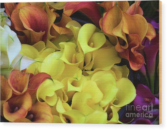 Multicolored Calla Lillies Wood Print