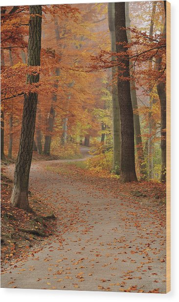 Munich Foliage Wood Print