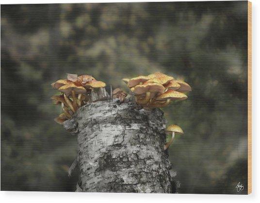 Mushrooms Atop Birch Wood Print