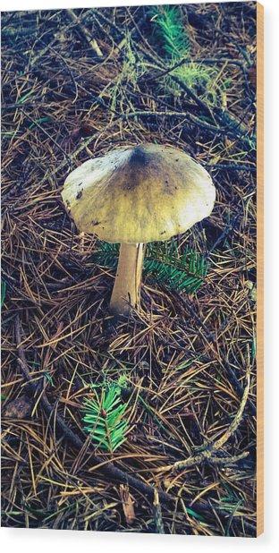 Mushrooms Of Oregon Wood Print