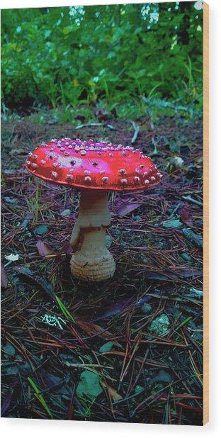Mushrooms Of Oregon II Wood Print