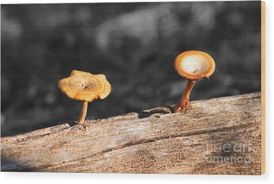 Mushrooms On A Branch Wood Print
