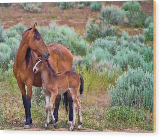 Mustang Horse And Foal Wood Print