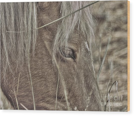 Mustango Wood Print