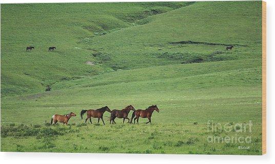 Mustangs Of The Flint Hills Wood Print