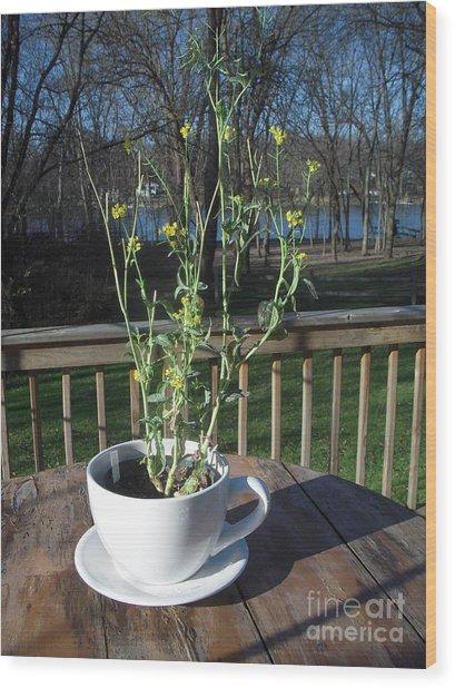 Mustard Seed Plant Cup Wood Print by Deborah Finley