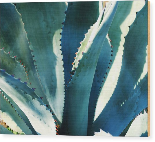 My Blue Agave Wood Print