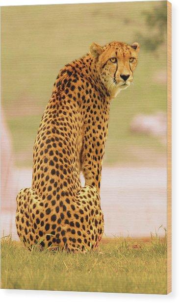 My Cheetah Wood Print