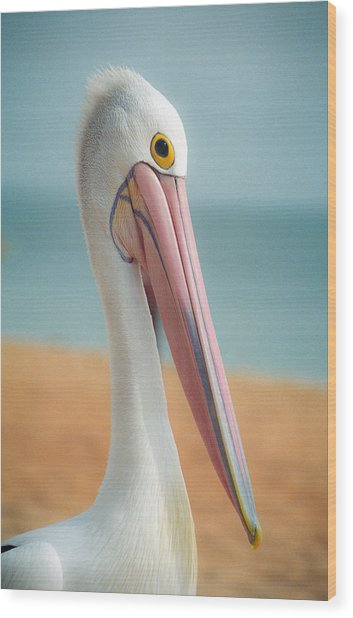 My Gentle And Majestic Pelican Friend Wood Print