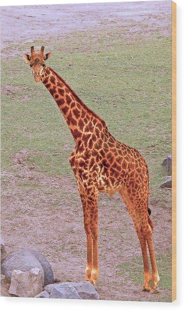 My Giraffe Wood Print