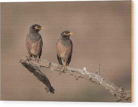 Myna Pair Wood Print