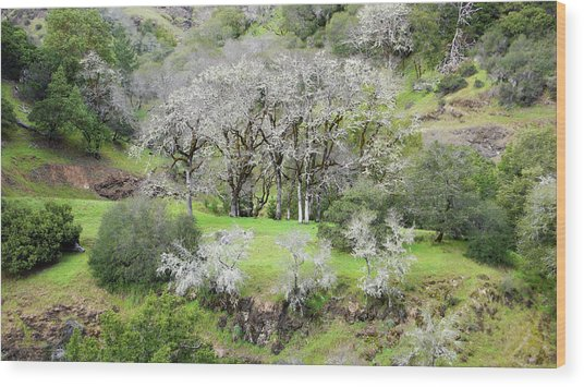 Mysterious Landscape In Sonoma County Wood Print